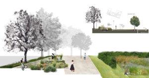 Parco-della-Cappuccina-rain-garden